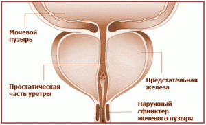 adenoma-prostaty-simptomy
