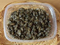 Лечение аденомы предстательной железы пчелиным подмором