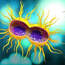 Азитромицин при гонорее: схема приема антибиотика