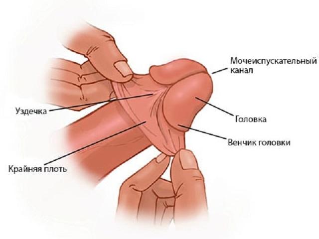 Болит головка полового члена